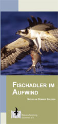 Fischadler_Flyer.pdf